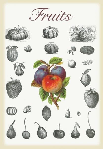 תמונת וינטאג׳ - Fruits, פירות, סדרת רטרו, הום סטיילינג, תמונה לבית, הדפס איכותי על נייר, רעיון למתנה