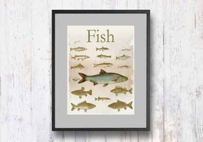 תמונת וינטאג׳ - Fish, דגים, סדרת רטרו, הום סטיילינג, תמונה לבית, הדפס איכותי על נייר, רעיון למתנה