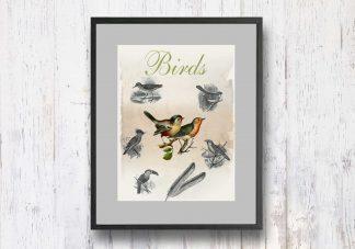 תמונת וינטאג׳ - Birds, ציפורים, סדרת רטרו, הום סטיילינג, תמונה לבית, הדפס איכותי על נייר, רעיון למתנה